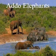 Addo Elephant Park Day Tour